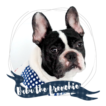Have you met Bubu the Frenchie?